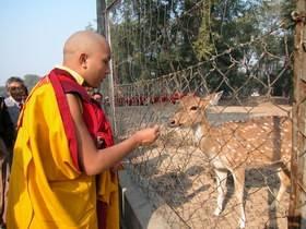 S.S. Karmapa no Parque das Gazelas, em Sarnath, Índia.